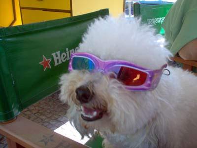 poodle no calor