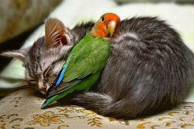 amizade gato e passáro