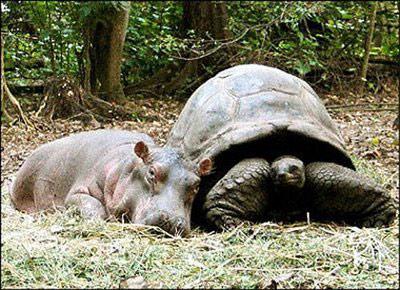 amizade de animais