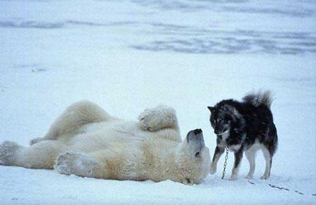 amizade de cachorro