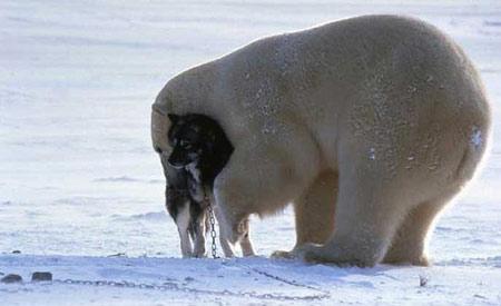 O cão e o Urso