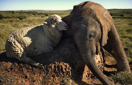 amizade animais selvagens