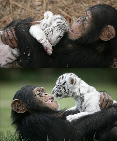 amizade animal