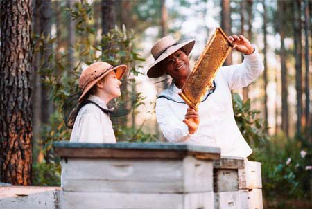 colhendo mel